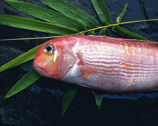 cá kình có hàm lượng thủy ngân cao