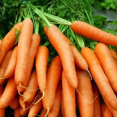 cà rốt tốt cho mắt